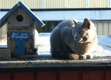 Placera fågelbordet mer skyddat så att inte till exempel katterna kommer åt matgästerna. Foto: Sylvia Svensson