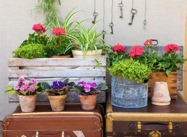 På liten yta ryms mycket skaparglädje!  Foto: Blomsterfrämjandet.