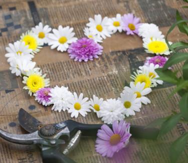 Buskmargerithjärta! Foto: Blomsterfrämjandet