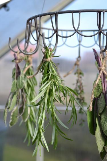 Rosmarin, timjan och salvia är kryddväxter som fungerar fint att torka. Foto: Blomsterfrämjandet
