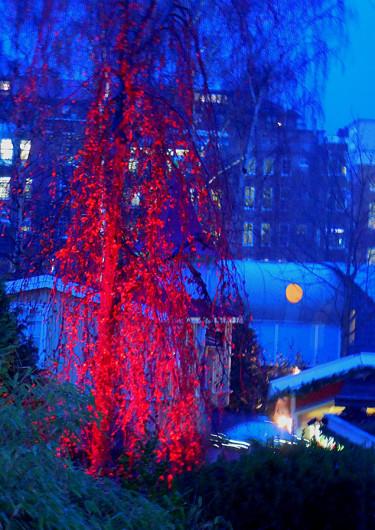 Björk med bladen kvar i juleskrud. Foto: Sylvia Svensson