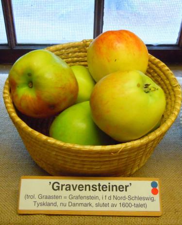 'Gravensteiner'. Foto: Bernt Svensson