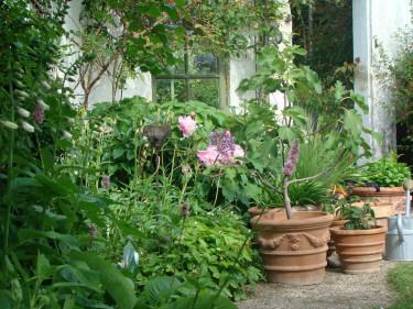I stora krukor kan du odla dina älsklingsväxter trots att de egentligen inte är rätt växt på rätt plats.