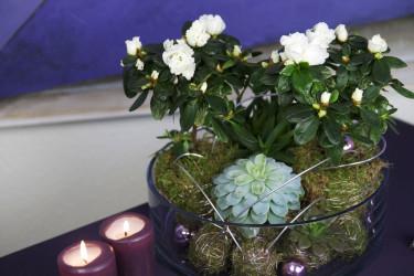 Lägg till en azalea för höjd och blomning! Foto: Blomsterfrämjandet