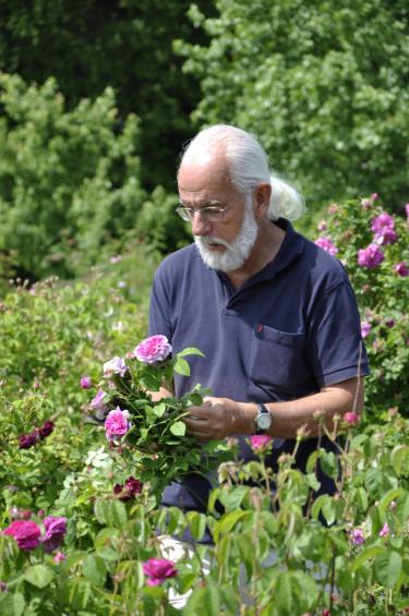 Lars-Åke Gustavsson i POM-odlingen på Fredriksdal. Foto: Wiveka Krantz.