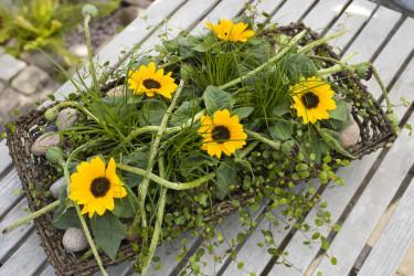 Solrosor är väldigt vackra i arrangemang. Foto: Floradania