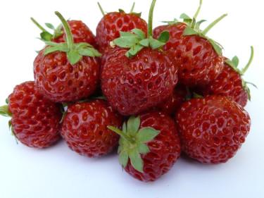Framberry - en korsning mellan hallon och jordgubbar är årets nyhet och en riktig storsäljare i [Odla.nuShop](http://erbjudande.odla.nu/sm/).