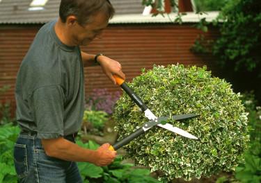 Häcksaxen är perfekt när du ska forma buskar, häckar och träd. Foto: Fiskars.