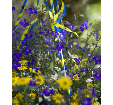 Juniampel med lobelia och husarknappar. Foto: Blomsterfrämjandet