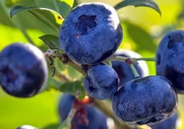 Bärplantor & fruktträd