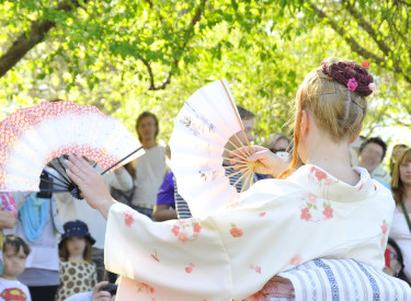 Kärsbärsdans, Sakura. Foto: Bernt Svensson