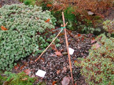 Stödpinnar för skyddsväv. Foto: Sylvia Svensson