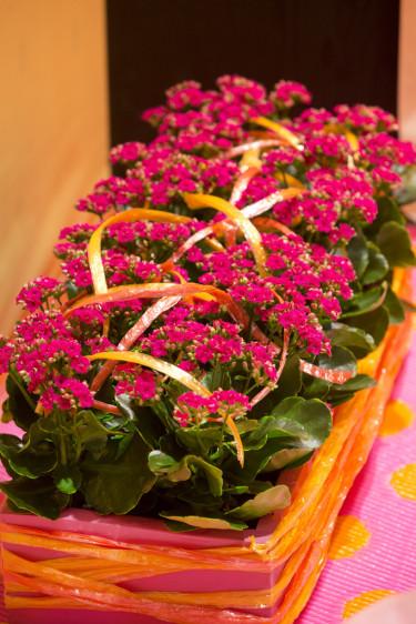Vira färgade plast- eller bastsnören runt krukan och över växten. Annorlunda och kul! Foto: Floradania