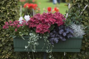 Bild: Blomsterfrämjandet/Görgen Persson