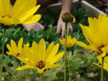 Trädgårdsbloggar handlar om hela livet i trädgården − odlingen, blommorna, vi som lever där och mycket, mycket mer. Foto: Katarina Kihlberg