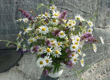 Sju sorters vilda blommor. Foto: Sylvia Svensson