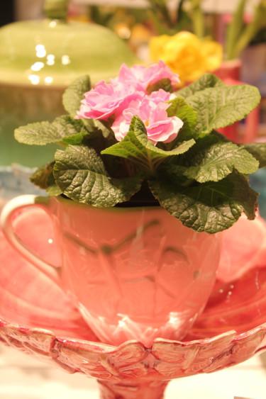 Jordviva - Foto: Blomsterfrämjandet