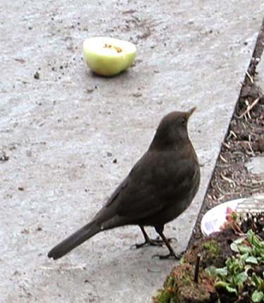 Fåglar behöver ännu mat! Foto: Sylvia Svensson