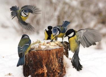 En smarrig buffé fylld med fågelgotter kan orsaka rena huggsexan! Foto: Ingela Sevdin