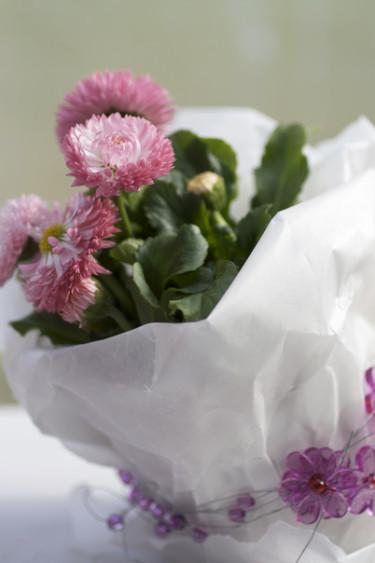 Så söt som bara en rosa tusensköna kan vara! Foto: Blomsterfrämjandet