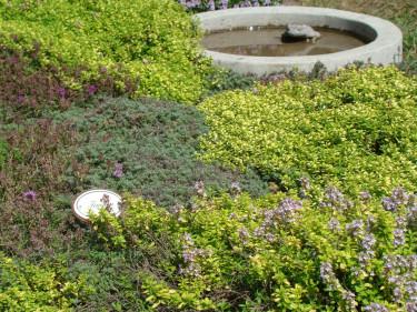 Marktäckande växter kan få breda ut sig under buskar och träd, på slänter och andra svårodlade platser, för att fylla ut mellan kantstenar och i stenpartier och för att hålla tillbaka ogräs i rabatterna.