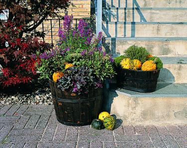 Vackra pumpor tillsammans med bland annat hebe. Bild: Floradania
