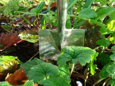 Flytta växter på våren innan de har börjat sin växtsäsong. Är det så här grönt i rabatten är det bättre att vänta med flytten till hösten.