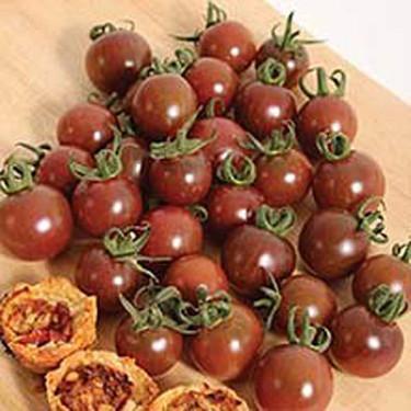 Tomat 'Black Opal' Foto: Mr. Fothergill's