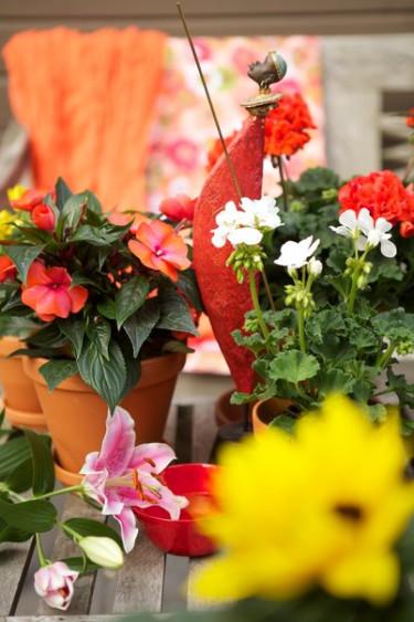Trendtips inför 2012: Nya horisonter.  Foto: Blomsterfrämjandet /Gustaf Emanuelsson