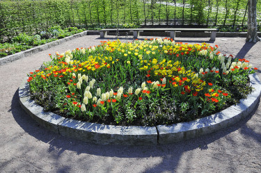 Lökrabatten under den tidiga våren. Foto: Sylvia Svensson