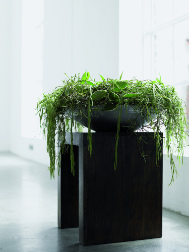 Vackra gröna växter i arrangemang. Foto: Floradania