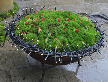 Redan utanför växthuset är det juligt med små, röda jultulpaner och ljusslingor. Foto: Sylvia Svensson