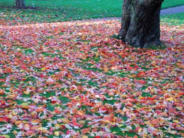 Snart börjar löven ändra färg och singla ner! Foto: Sylvia Svensson