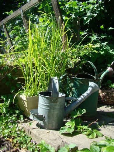 Fina vattenkannor är ett roligare inslag i trädgården än sprayburkar med bekämpningsmedel.