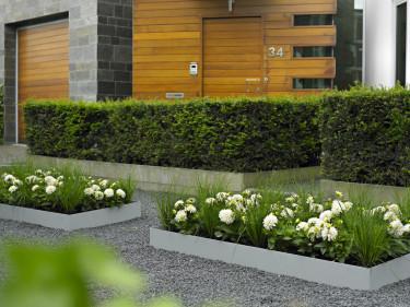 Modern dahlia- och gräsplantering. Foto: Blomsterfrämjandet