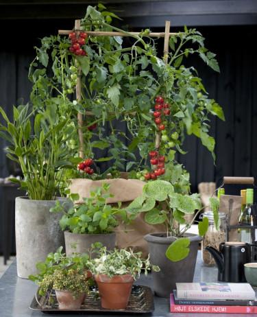 Vackra, goda och livgivande altansnacks. Foto: Floradania