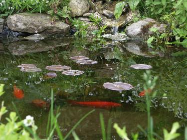 Ta bort pumpen, lägg på nät och skaffa ev. isvakt om du har fiskar i dammen.Foto: Sylvia Svensson