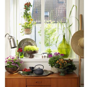 Tropikerna på fönsterbrädan. Foto: Blomsterfrämjandet/Peter Carlsson