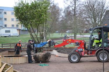 Plantering på apelgården