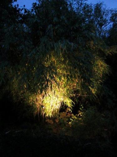 En markspot kan riktas upp mot en bambus städsegröna och rasslande grenverk.