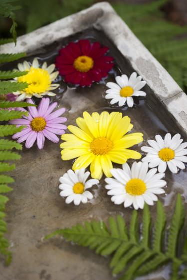 Blommor i vattenbad. Foto: Blomsterfrämjandet/Anna Skoog