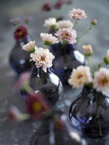 Krysantemum, _Chrysanthemum_. Foto: Lena Granefelt.