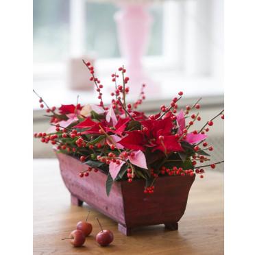 Bordsdekoration i avlångt träfat med miniväxter i fräscha julfärger samt bärkvistar.