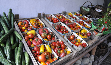 Olika tomater till salu i Fuglebjerggården i Danmark.