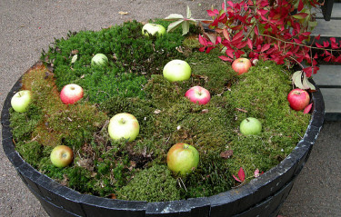 Mossig äppeltunna - jättevackert i advent! Foto: Sylvia Svensson