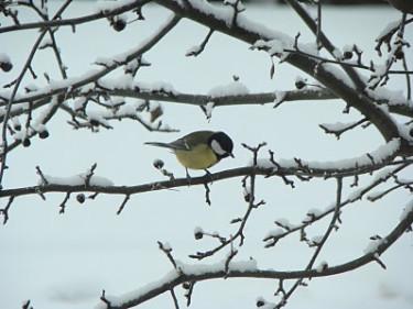 Småfåglarna vill inte att vi överger dem nu!