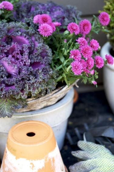 Färgsprakande prydnadskål.  Foto: Blomsterfrämjandet