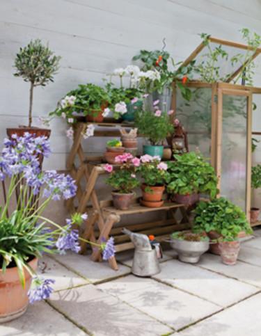 Växtrappa och litet växthus, Nelson Garden.