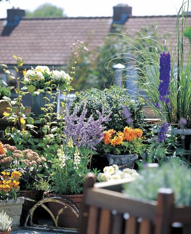 Dahlia 'Gallery Vincent' i sällskap med andra växter. Foto: Blomsterfrämjandet