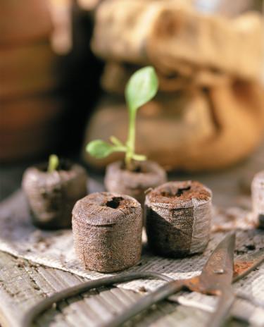 Torvbriketter är enkla och praktiska att så fröer eller driva sticklingar i. Foto: Lord Nelson